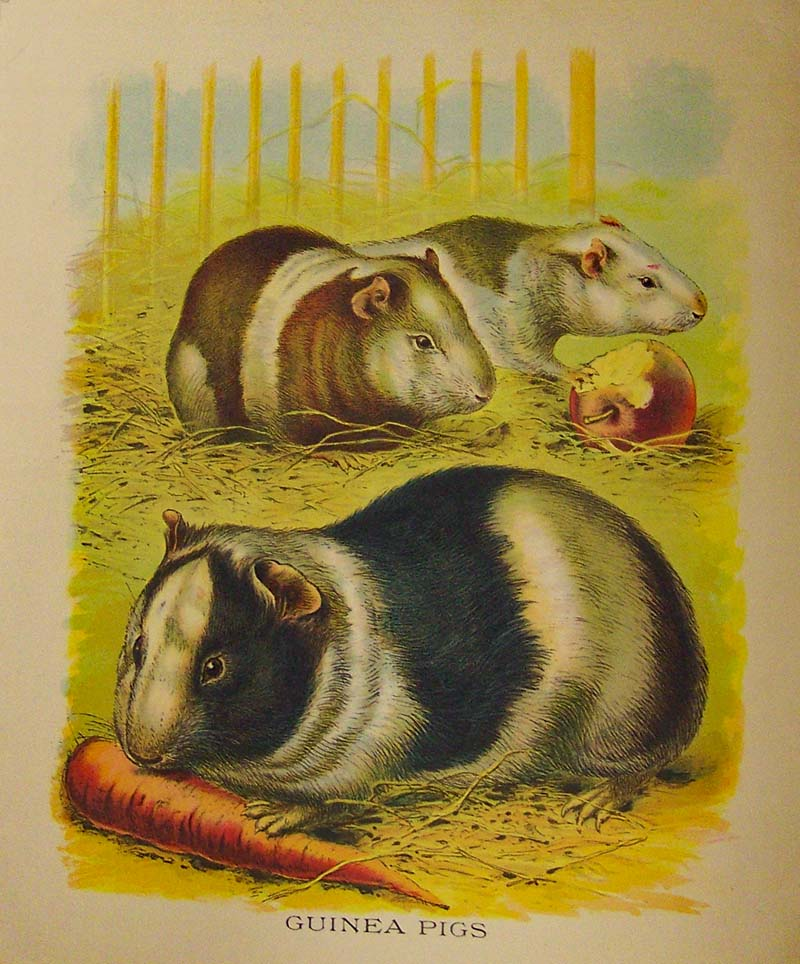 Prints Old Amp Rare Farm Animals Antique Maps Amp Prints