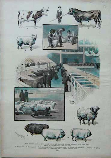 005frm  1893 sheep herding