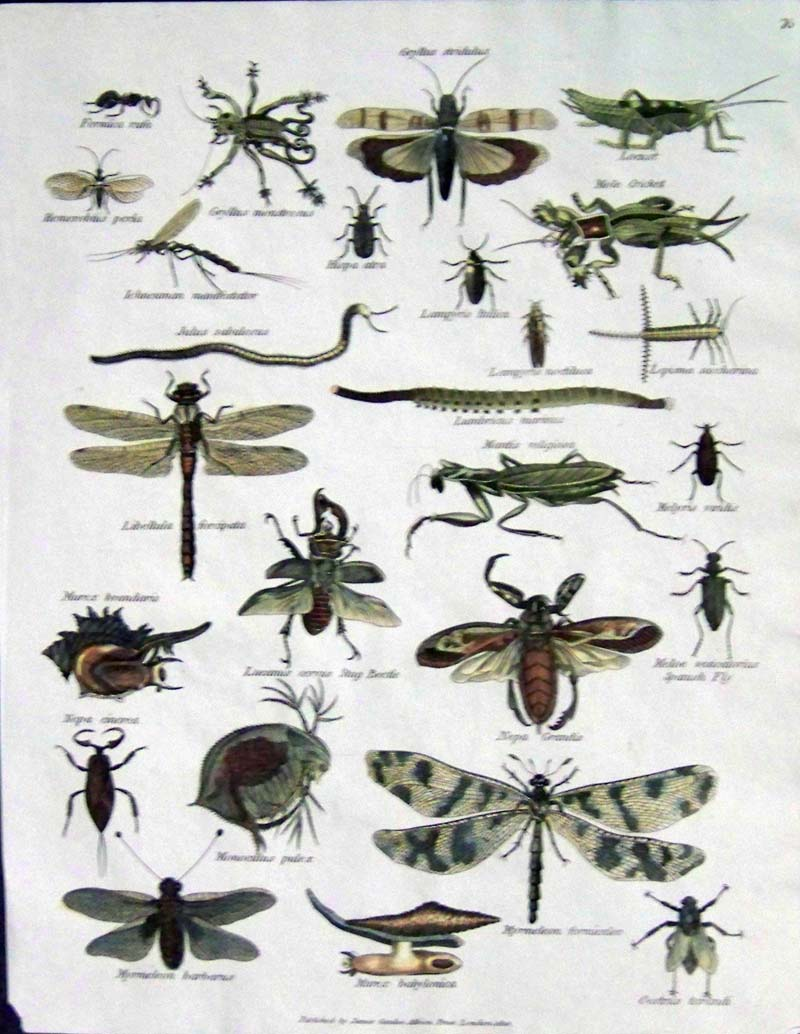 Image Gallery insects ...