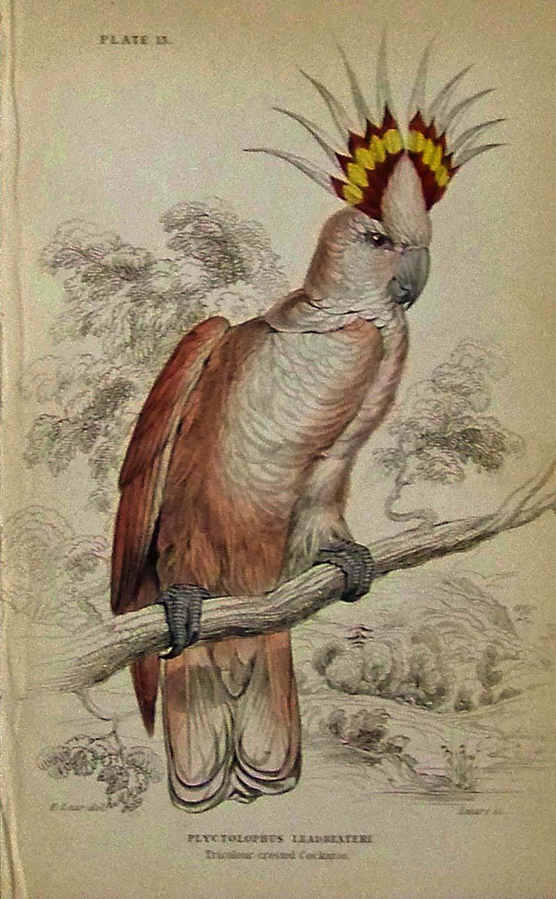 Prints Old & Rare - Birds - Antique Maps & Prints