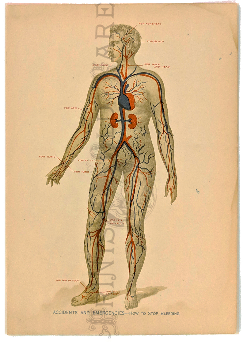 Prints Old Rare Medical Surgical And Anatomy Antique Maps